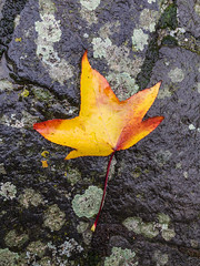 Autumn (bertrandwaridel) Tags: autumn echallens fall november switzerland vaud leaf pavement rain water