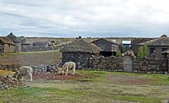 18 2637 - Pérou, péninsule de Capachica, une ferme (Jean-Pierre Ossorio) Tags: pérou capachica ferme alpaga maison maisontraditionelle