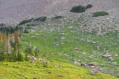IMG_8196-1 (Debbie Spradley) Tags: montana family vacation troy glaciernationalpark rosscreekcedarsscenicarea kootenaifalls goat sheep marmot ptarmigan celebration hike hiddenlaketrail stmarylake wizardisland lakemcdonald goingtothesunroad