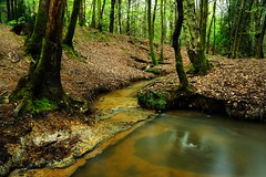 It's time to find new locations (Puckpics) Tags: roosthole sheepwashgill horsham westsussex water stream woodland woods