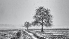 When the Snow comes... (Ody on the mount) Tags: anlässe bäume em5ii fototour landschaft mzuiko4518 omd olympus pflanzen schnee weg winter bw landscape monochrome sw snow trees ways