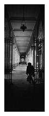 (Oeil de chat) Tags: nb bw monochrome 35mm film argentique pellicule kodak trix hasselblad xpan panoramique vertical streetphoto photoderue urbain street contraste perspective rennes