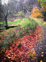 Dreamland . Woodland (Missy Jussy) Tags: woodland dreamland forest leaves grass path trees autumn light iphone colourful dogwalk outdoor outside seasonal rochdale piethornevalley northwest england