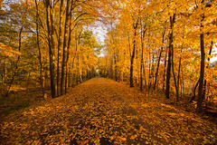 Golden light (LEXPIX_) Tags: autumn fall foliage color yellow orange leaves path golden light nikon d850 nikkor 1424 lexpix forest road bikepath newengland us