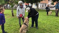 IMG_8563 (Doggy Puppins) Tags: educación canina adiestramiento canino perro dog