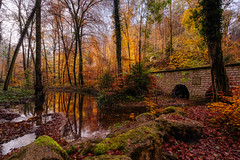 Autumn (Jan Hoogendoorn) Tags: luxemburg luxembourg bos forest mullerthal water reflection reflektie herst autumn tunnel
