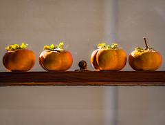 Ripening Persimmons (channel locks) Tags: persimmon window orange olympusomdem1mkll mzuiko75mmf18