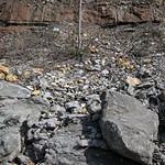 Limestone (Warix Run Member, Slade Formation, Upper Mississippian; Clack Mountain Road Outcrop, south of Morehead, Kentucky, USA) 10 thumbnail