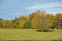 Shropshire Countryside (Seventh Heaven Photography *) Tags: shropshire countryside landscape trees fields nature sky nikon d3200 autumn grass