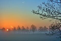 Silence in the fields (Tobi_2008) Tags: sonnenaufgang sunrise nebel fog trees bäume landschaft landscape natur nature sachsen saxony deutschland germany allemagne germania