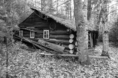 Not from human (Wicked Dark Photography) Tags: bw wisconsin abandoned blackandwhite cabin decay derelict logcabin monochrome