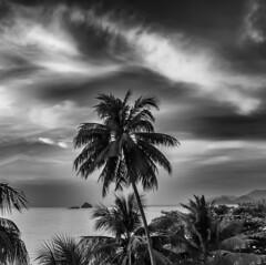 Sunset at Koh Chang / Закат на Ко-Чанге (dmilokt) Tags: природа nature пейзаж landscape море sea пальма palm небо sky облако cloud dmilokt чб bw черный белый black white