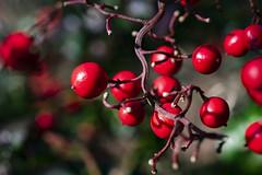 NEX_0347 (valerie something or other) Tags: carolina raleigh arboretum winter