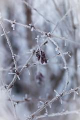 _MG_6485 (s.niewiarowska) Tags: winter poland podlasie