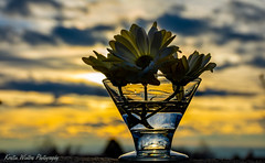 At the end of the day. (Kerstin Winters Photography) Tags: colors sky sunset outdoor flowers photography fotografie flickr nikondigital nikondsl nikon