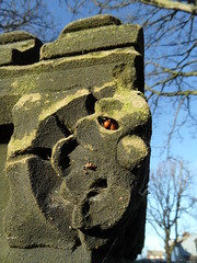 Ladybird eye (Nekoglyph) Tags: skelton cleveland stone green face allsaints insects winter hibernation wall battlements ladybirds red black flower trees branches blue carved wildlife
