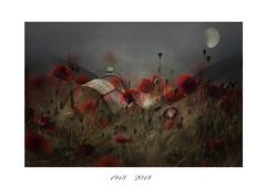 Lest We Forget                                           ( explore ) (pete214peg) Tags: poppies armedforces hurricane