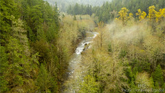 Gray Wolf River 0230 (All h2o) Tags: pacific northwest olympic peninsula forest water nature landscape wilderness tree trees autumn fall season