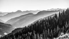 Gabühel (bernd.kranabetter) Tags: dientenamhochkönig autumn gabuehel nature mountains trees blackwhite
