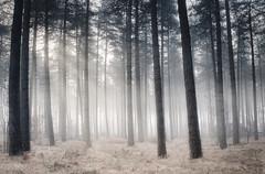 Misty Trees (Jochem.Herremans) Tags: trees mist fog luminar skylum fujifilm xt3 belgium antwerp turnhout nature outdoor sunshine sunbeams
