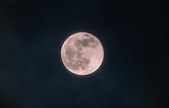 Super Blood Wolf Moon - Minnesota (Tony Webster) Tags: minnesota superbloodwolfmoon tonywebster eclipse lunareclipse moon superblood supermoon wolfmoon eastlake unitedstatesofamerica us