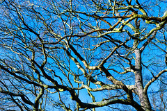 Tree (davidheath01) Tags: landscape forest tree trees timber beauty uk england english englishforest nikon nikond850 nature nikkor blue color colour colors colours contrast beautiful branch branches twigs abstract woods lanscape