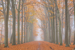 Misty Autumn Morning (Martine Lambrechts) Tags: misty autumn morning tree nature landscape