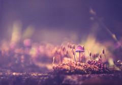 Fairy nature (Ro Cafe) Tags: garden nature mushroom moos nikkor2470f28 nikond600 textured closeup