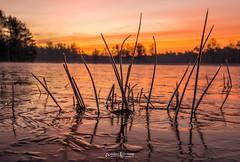 Cold Sunrise Surae (Willem Vernooy (FoToWillem)) Tags: surae oosterhout landscape landschap holland hollanda hollande brabant water ice ijs winter nature natuur jaargetijde cold sunrise zon zonsopkomst