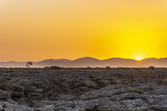 _RJS4718 (rjsnyc2) Tags: 2019 africa d850 desert dunes landscape namibia nikon outdoors photography remoteyear richardsilver richardsilverphoto safari sand sanddune travel travelphotographer animal camping nature tent trees wildlife