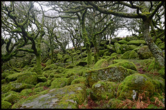 Devon Rockery. (curly42) Tags: devon wistmanswood dartmoor woodland rocks dartmoornationalpark