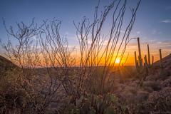 Sunset At Saguaro (Stuart Schaefer Photography) Tags: goldenhour landscape sunset travelphotography outdoor saguaronationalpark evening tucson sun sonya7m3 travel sonya7iii cloudscape outdoors arizona clouds sky dusk cactus
