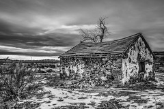 Humbolt County, Nevada (paccode) Tags: solemn d850 landscape desert bushes brush serious nevada quiet snow winter shack farm abandoned wreck monochrome lonely home house creepy tree scary mojave forgotten blackwhite field orovada unitedstatesofamerica us