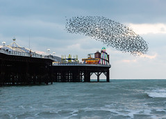 Starlings over the Helter Skelter (lomokev) Tags: brightonandhove england unitedkingdom gb file:name=1811215dmrk39911 clouds sea sunset brighton pier brightonpier palacepier starlings murmuration flock starling nature orange canoneos5d canon eos 5d helterskelter