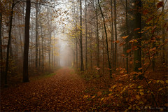 misty forest (klaus.huppertz) Tags: fürfeld autumn fall mist misty forest wald herbst nebel wood baum bäume tree laub foliage leaves nikon nikond850 d850 nikkor 2470mmf28g natur nature outdoor outside ff greatphotographers greaterphotographers