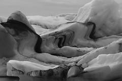 Gulls On Berg (peterkelly) Tags: iceland bw bestoficeland digital canon 6d gadventures jökulsárlónglacierlagoon ice berg iceberg birds gulls bird gull