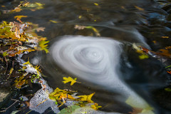 Sunday's Swirl (tquist24) Tags: littleelkhartriver nikon nikond5300 outdoor autumn fall geotagged leaf leaves longexposure nature river swirl water bristol indiana unitedstates