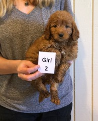 Darby Girl 2 pic 2 12-16