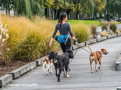 Dog Walking, Riverside Park South, Upper West Side, New York City (jag9889) Tags: 2018 20181101 animal creature dog dogwalking hudsonriver manhattan ny nyc nycparks newyork newyorkcity newyorkcitydepartmentofparksrecreation outdoor park plants promenade publicpark river riversideparksouth usa uws unitedstates unitedstatesofamerica upperwestside walkway water waterway woman wood jag9889