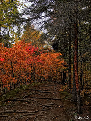 ... (Jean S..) Tags: path colors autunm fall trees rural nature outdoors