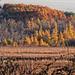Autumn at Big Marsh Lake