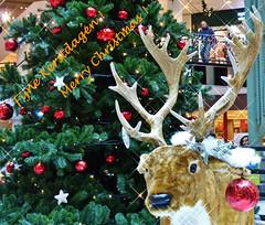 Merry Christmas! Fijne Kerstdagen! (Johnny Cooman) Tags: gentmariakerke vlaanderen belgië bel thegalaxy gent ghent gand gante belgium ベルギー flemishregion flandre flandes flanders flandern bélgica belgique belgien belgia flhregion eastflanders aaa panasonicdmcfz200 oostvlaanderen christmas weihnachten noël kerst