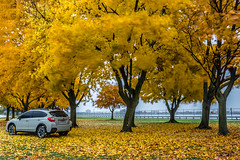 Subaru Crosstrek + Fall (HisPhotographs.com) Tags: fall colors autumn fallcolors newyork niagarafalls niagara subaru crosstrek trees yellow orange leaves fallin falling ny desert khaki desertkhaki fallseason