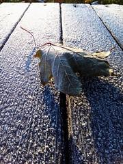 Frost (msergeevna) Tags: prestigio nature frost winter leaves