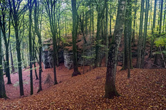 Forest 3 (Geert E) Tags: woods forest woodlans autumn fall trees rocks arbres forêt autonne leafs bomen bos herfst bladeren rotsen roches