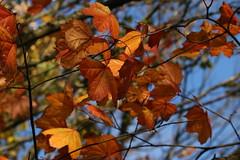 IMG_4704 (monika.carrie) Tags: monikacarrie wildlife scotland seatonpark