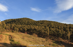 Ruta: Turó de Samon (1.273 m) (Els 100 Cims) (Las Fotos de Rafa Yanes) Tags: beauty canon24105f4isii canon700d displacements ermitadesantelies extremterrain green hill landscape landscaping mountainrange nature old outbreak run sky stone totransit trekking turodesamon turódesanmontree arch architecture autumn beautiful building calm cathedral catholic church discoverearth europe facade feedyouradventure footpaht forest getoutside gooutside gothic hikers history journeys jungle landmark look mountain naturefrother outdoor religion structure sun symbol tomarch tourism travel travelmeer walking wanderlust workingday