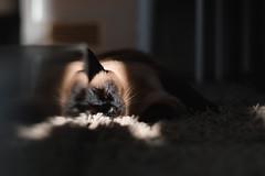 the last light for today... (danye.de) Tags: siam fuji cat sunlight astia rocco fujifilm sun