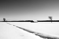 Black & white - Noir et blanc (soniamarmen) Tags: winter landscape blackwhite skancheli