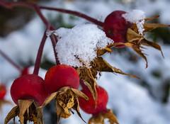 EmilyMunoz_theworldincolour_05 (littleemphoto) Tags: fall2018 idaho rexburg snow